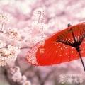 桜舞う季節に