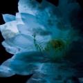 LUNA SEA MEMORIAL COVER ALBUM-